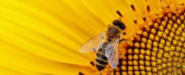 Bienenwachstücher unhygienisch