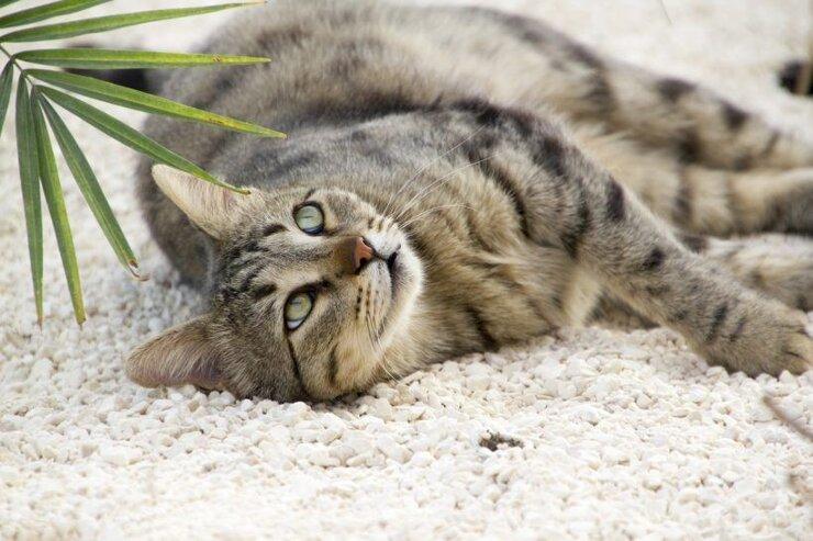 Katzenstreu plastikfrei